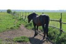 Ferienhaus Gramzow Uckermark Pferdekoppel