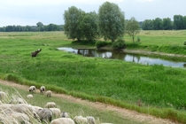 Ferienhaus Elbe Lenzen Schafe