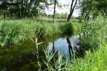 Ferienhaus Elbe Lenzen Fluss