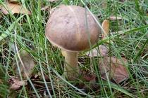 Spreewald Pilze sammeln