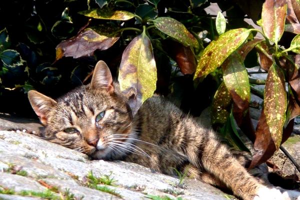 Ferienwohnung Spreewald Kätzchen
