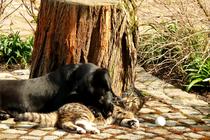 Ferienwohnung Spreewald Hund Katze