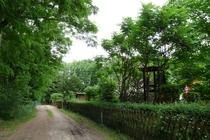 Ferienhaus Schwielowsee Ferch Lage am Wald