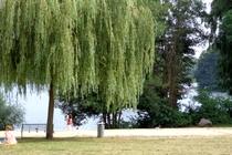 Badestelle Glienicker See im Sommer