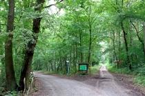 Spazieren Königswald