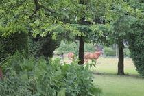 Ferienwohnung mit Pferdekoppel