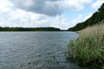 Lübbesee Ufer