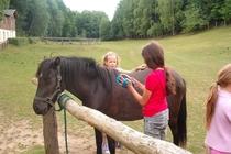 Ferienhaus Boitzenburger Land Thomsdorf Sommerland Pferde