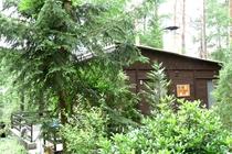 Ferienhaus Stechlin Dagowsee Wald
