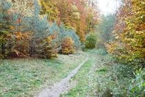 Ferienwohnung Stechlin Dagow Waldbild