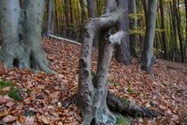 Ferienwohnung Stechlin Dagow Wald